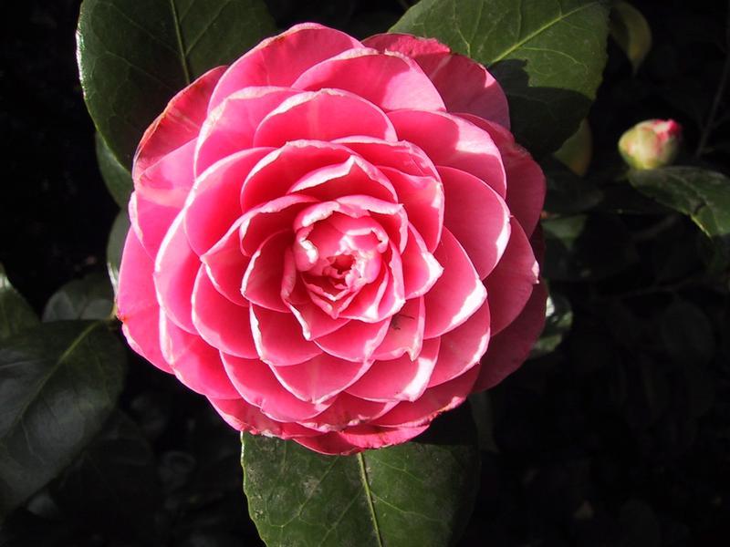 Le lexique de la fleur - Acquaverde, votre artisan fleuriste à Nantes